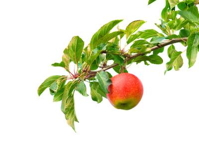 Der Apfel wächst nicht weit vom Stamm